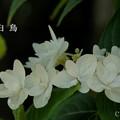写真: 瀬戸神社~山あじさい-420