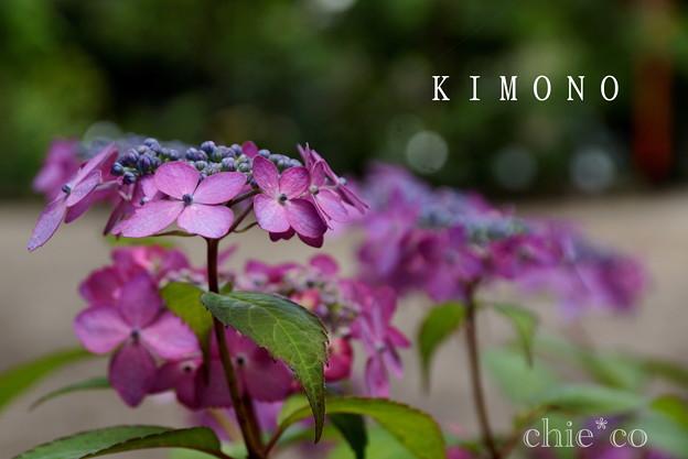 写真: 瀬戸神社~山あじさい-433