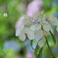 写真: 瀬戸神社~山あじさい-348