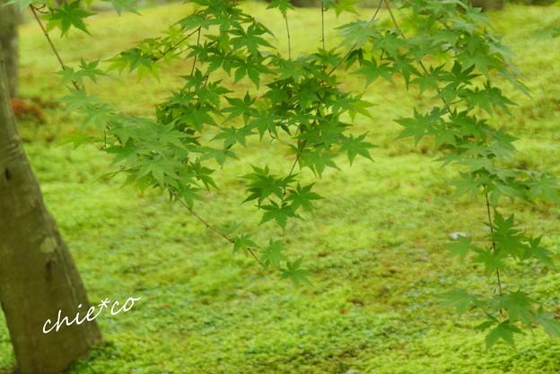 写真: 箱根美術館-186