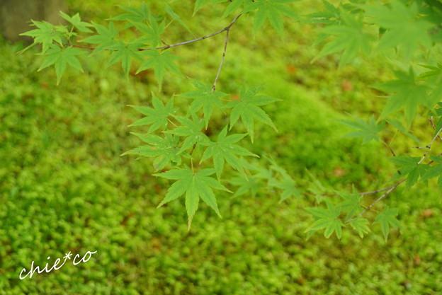 箱根美術館-187
