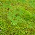 写真: 箱根美術館-187