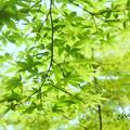 写真: 箱根美術館-195