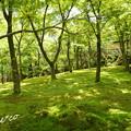 写真: 箱根美術館-215