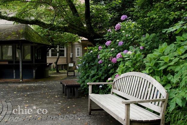 写真: 浄妙寺-133