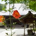 写真: 鎌倉-142
