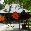 写真: 鎌倉-145