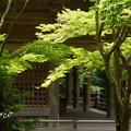 写真: 鎌倉-151