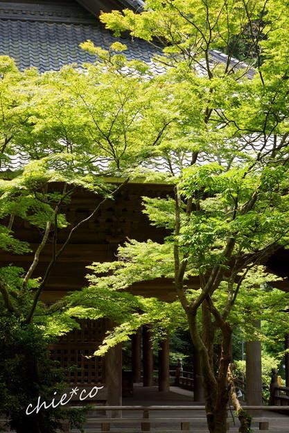 写真: 鎌倉-164
