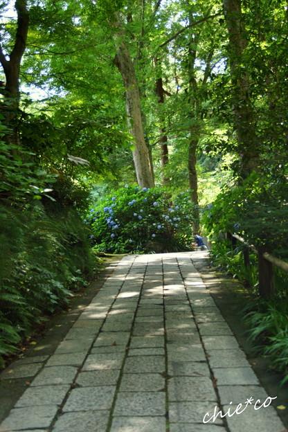 写真: 鎌倉-167