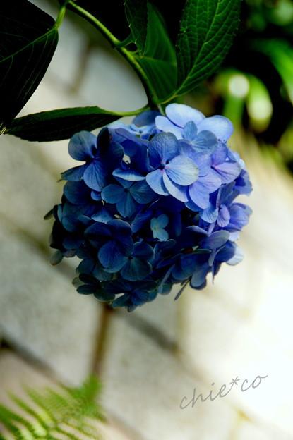 写真: 鎌倉-170