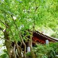 写真: 鎌倉-171
