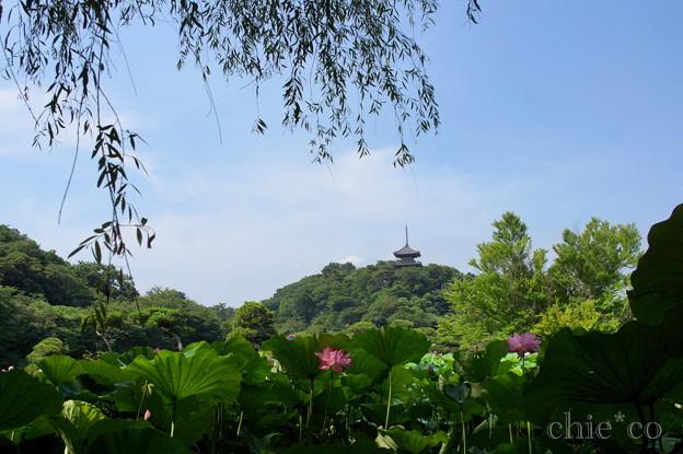 蓮の花と・・三重塔のある風景。。