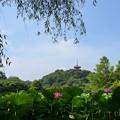 写真: 蓮の花と・・三重塔のある風景。。