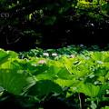 写真: 三渓園-236