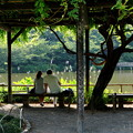 写真: 三渓園-243