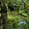 写真: 三渓園-251