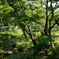 写真: 三渓園-252