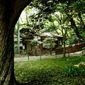 写真: 三渓園-261