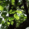 写真: 三渓園-264