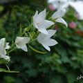 写真: 鎌倉-522