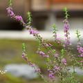 写真: 鎌倉-550