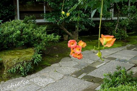 鎌倉-564