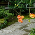 写真: 鎌倉-564