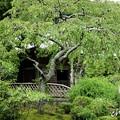 写真: 鎌倉-566