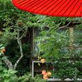 写真: 鎌倉-565