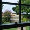 写真: 山手イタリア山庭園-304
