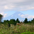 写真: 尾花と・・富士山。。。