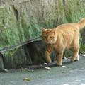 写真: 猫たち。。-005
