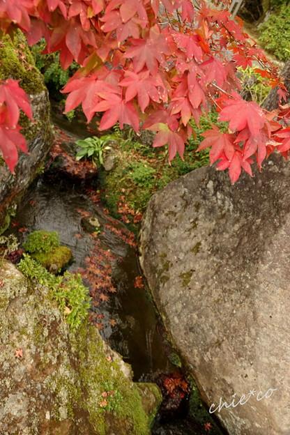 写真: 箱根美術館庭園-191