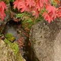 箱根美術館庭園-191