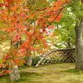 写真: 箱根美術館庭園-219