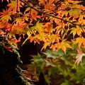 写真: 箱根美術館庭園-188