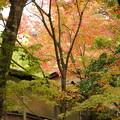 写真: 箱根美術館庭園-185