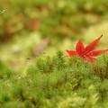 写真: 箱根美術館庭園-225