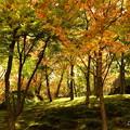 写真: 箱根美術館庭園-177