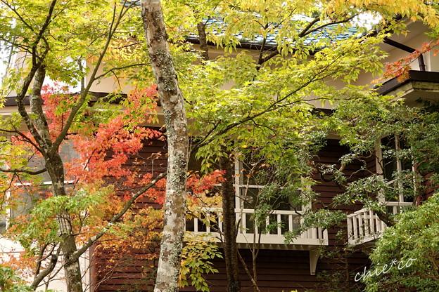 箱根美術館庭園-204