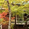 写真: 箱根美術館庭園-204