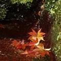 写真: 箱根美術館庭園-222