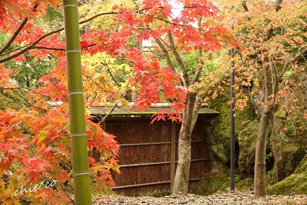 箱根美術館庭園-208