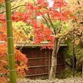 写真: 箱根美術館庭園-208
