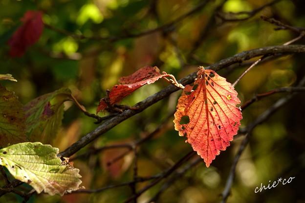 写真: 箱根湿生花園-210