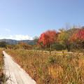 写真: 箱根湿生花園-228