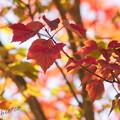 写真: 箱根湿生花園-238