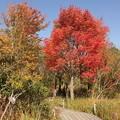 写真: 箱根湿生花園-259