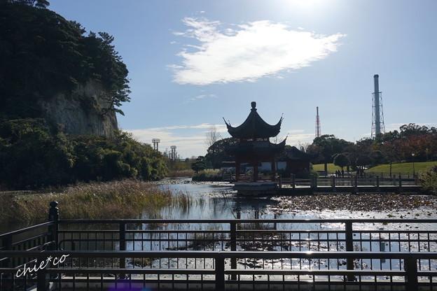 朝の池・・1
